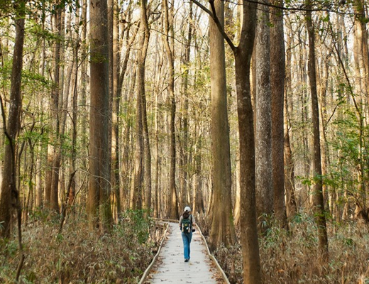 Congaree Park and Campgrounds